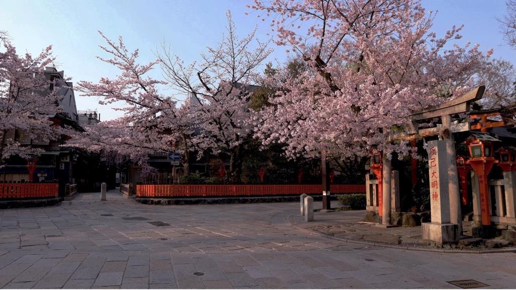桜の祇園白川巽橋