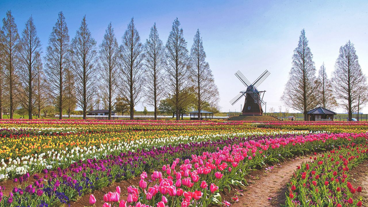 https://www.jpn47.happy-clovers.com/wp-content/uploads/2020/09/TulipWindmill2MV1280.jpg