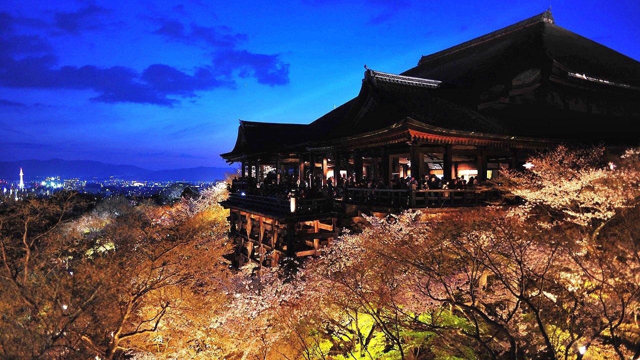 世界文化遺産 清水寺 桜のライトアップ