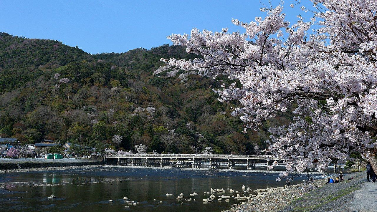 嵐山 渡月橋 桜