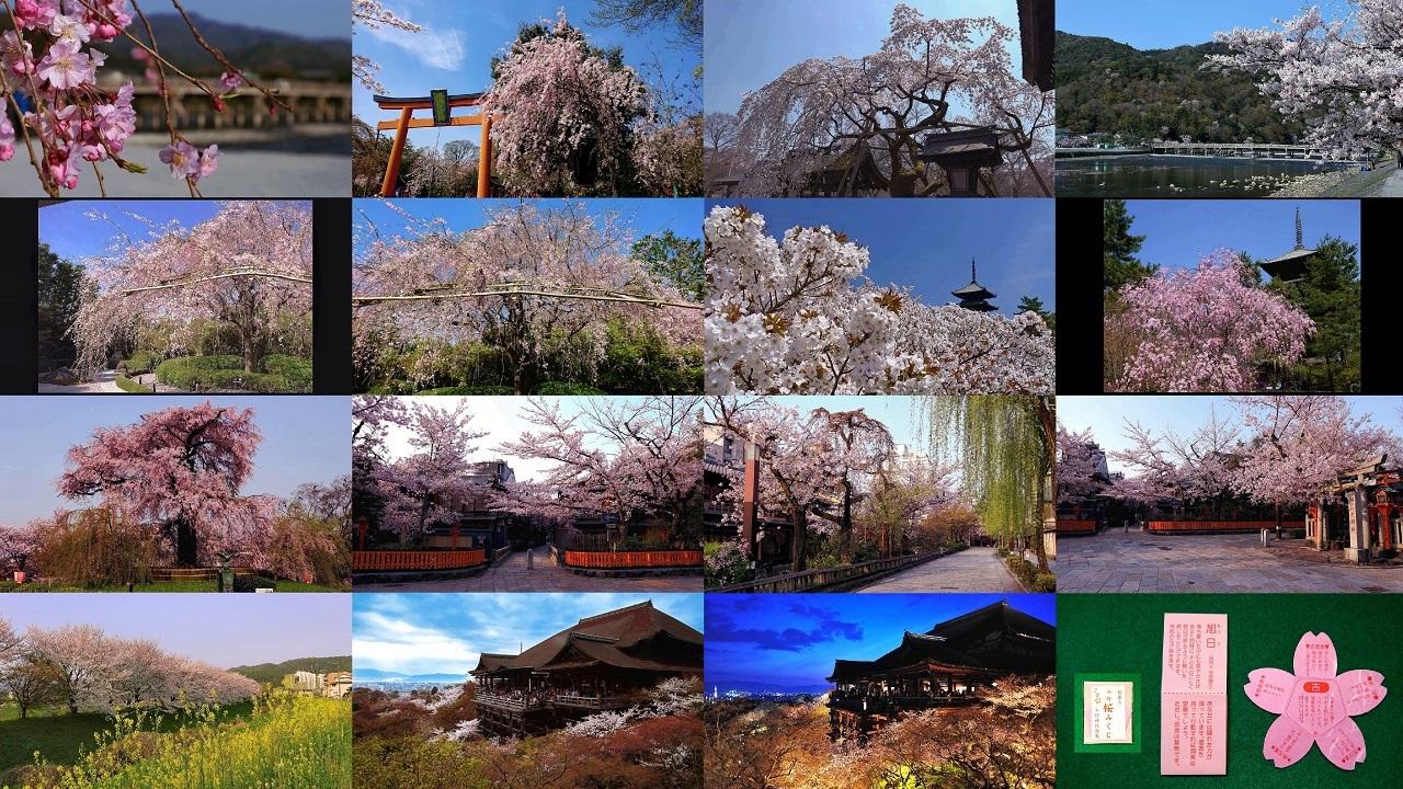 嵐山・清水寺など京都で人気のインスタ映えする桜の名所おすすめ7選